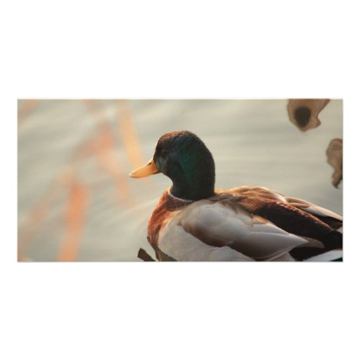 duck on the river photo card template