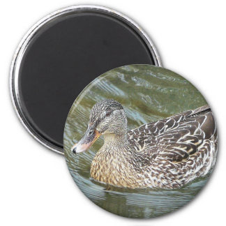 Duck Paddling 6 Cm Round Magnet