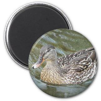 Duck Paddling 6 Cm Round Magnet