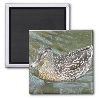 Duck Paddling Refrigerator Magnet