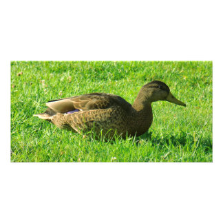 duck picture card