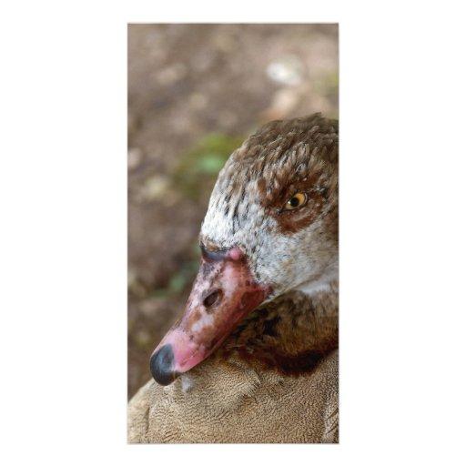 Duck Custom Photo Card