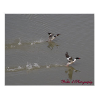 Duck Pond Poster