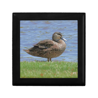 Duck Pond Small Square Gift Box