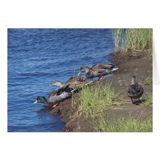 Duck Procession Card