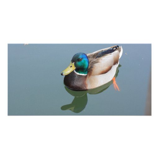 duck reflected by the water photo greeting card