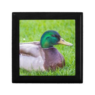 Duck Small Square Gift Box