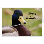 Duck Sorry to hear Card