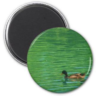 Duck Swimming on Pond 6 Cm Round Magnet