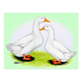 Duck:  White Pekins Postcard