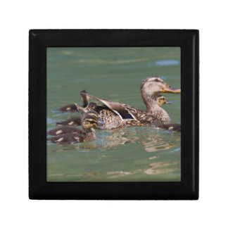 duck with ducklings on lake small square gift box