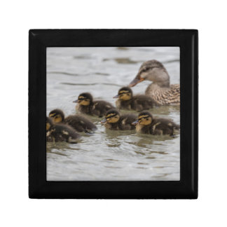 duck with her ducklings at lake small square gift box