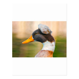 Duck with Mohawk Postcard