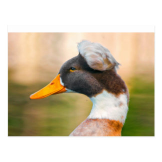 Duck with Mohawk Post Card