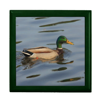 duck with water drops gift box