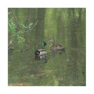 Duck, Wood Photo Print. Wood Canvas