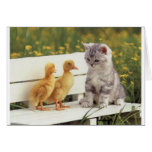 Duckheap and friend interview kitten. greeting card