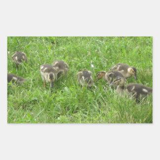 Duckies in the Grass Rectangular Sticker