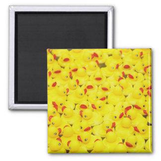 Duckies Magnet