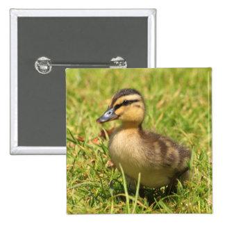 Duckling 15 Cm Square Badge