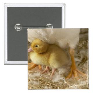 Duckling between mother's legs 15 cm square badge