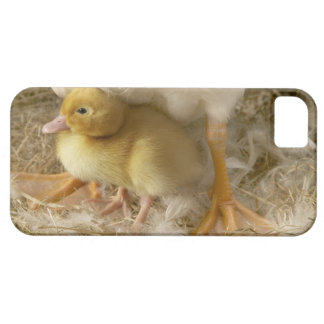 Duckling between mother's legs case for the iPhone 5