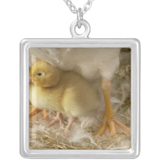 Duckling between mother's legs silver plated necklace
