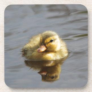 Duckling Coaster