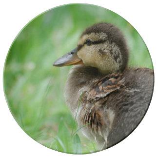 Duckling duck chicken ~ photo Jean Louis Glineur Plate