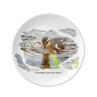 DUCKLING DUCK CHICKENS - photo Jean Louis Glineur Plate