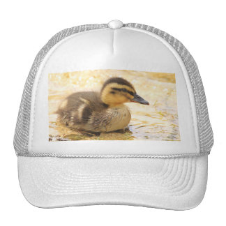 Duckling Hats