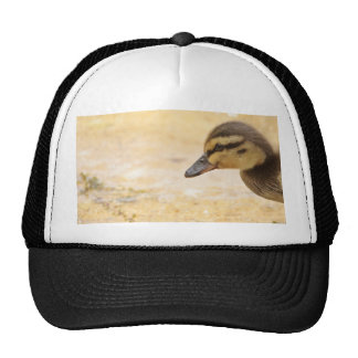 Duckling Trucker Hats