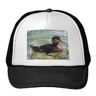 duckling mesh hats