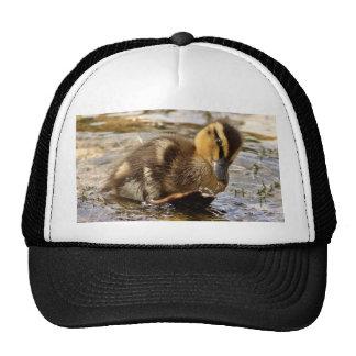 Duckling Trucker Hats