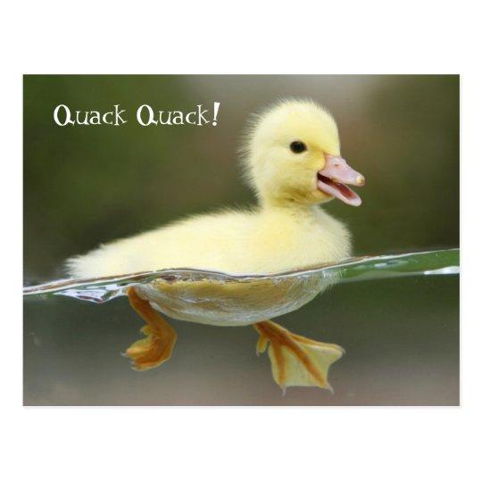 Duckling -  Quack Quack! Postcard