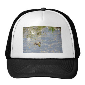 Duckling Reflections Mesh Hats
