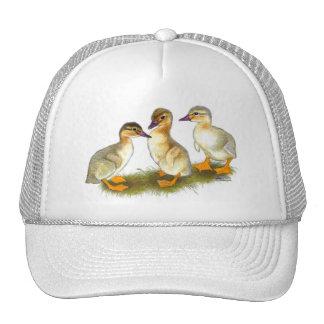 Ducklings:  Buff Orpingtons Cap