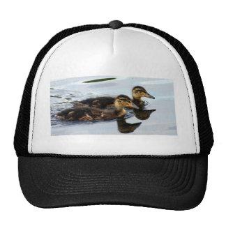 ducklings trucker hat