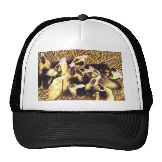 Ducklings Cap
