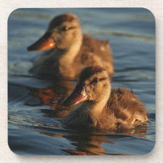 Ducklings Cork Coaster