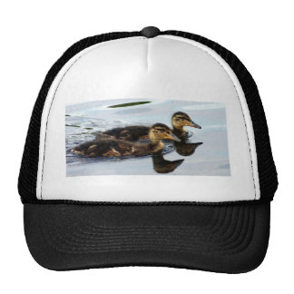 ducklings trucker hat