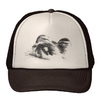 Ducklings Hat