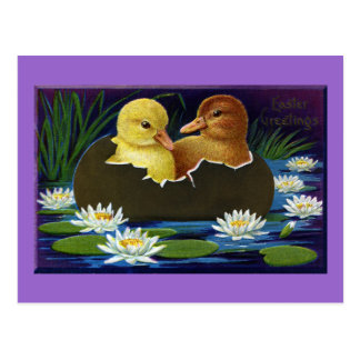 Ducklings in Eggshell Boat with Water Lilies Postcard