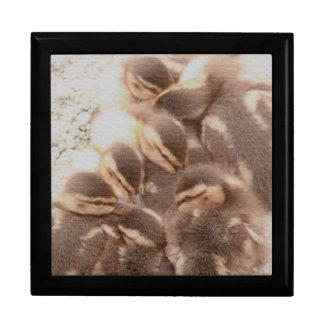 Ducks Birds Animals Wildlife Photography Large Square Gift Box
