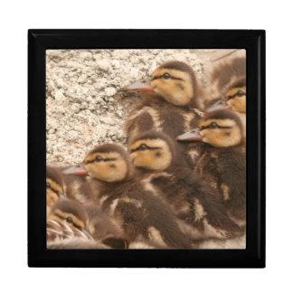 Ducks Birds Wildlife Animals Photography Large Square Gift Box