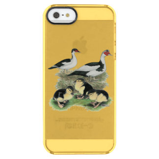 Ducks Black Pied Muscovy Family Clear iPhone SE/5/5s Case