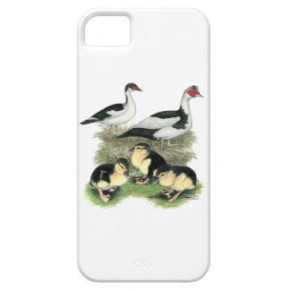 Ducks Black Pied Muscovy Family iPhone 5 Case