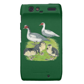 Ducks Blue Pied Muscovy Family Droid RAZR Cover