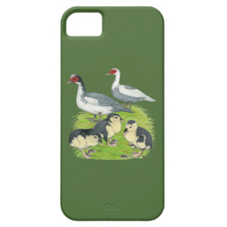 Ducks Blue Pied Muscovy Family iPhone 5 Case
