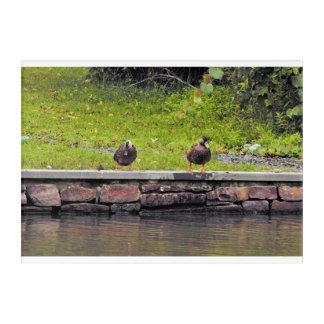 Ducks by Pond Acrylic Wall Art